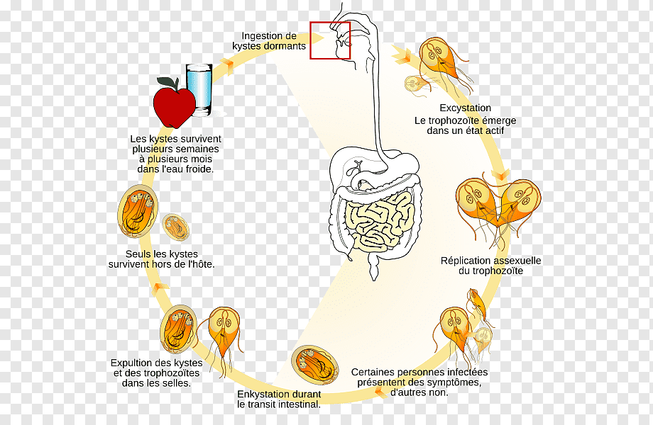 amebieza giardiozei cancro alla gola papilloma virus