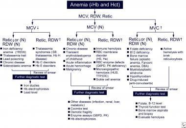 anemia workup)