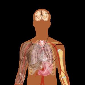 tratamentul paraziților din plămânii umani