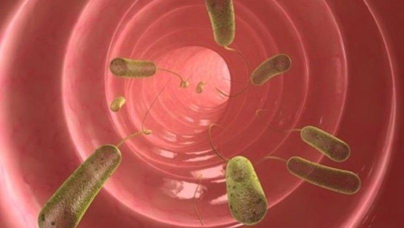 Simptomele parazitului celulelor cu ou de scaun