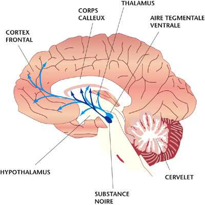 toxine qui monte au cerveau