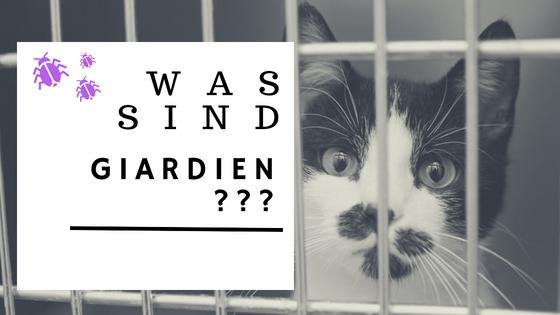 giardien katze naturlich behandeln)