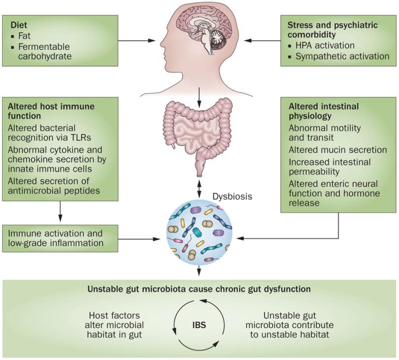 dysbiosis colon