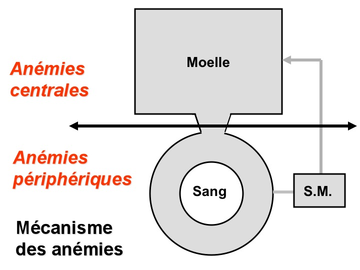 anemie falciforma - Traduction en français - exemples roumain | Reverso Context