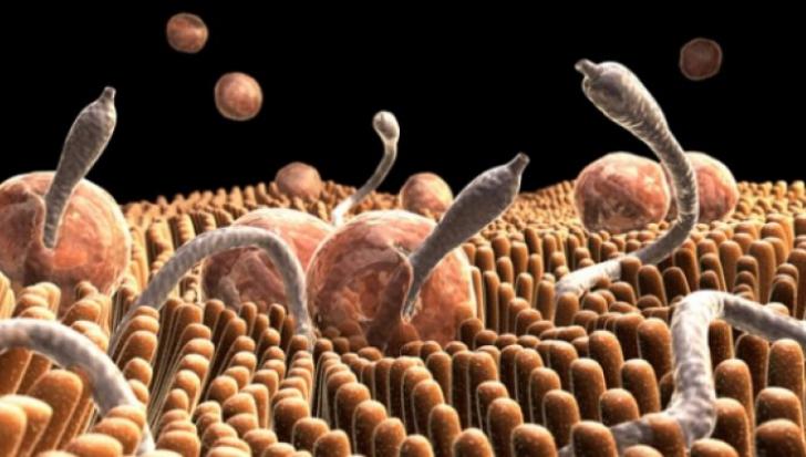 ce viermi mănâncă în organism