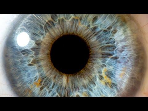 Ce viermi sunt în ochiul uman, Programează-te la doctor