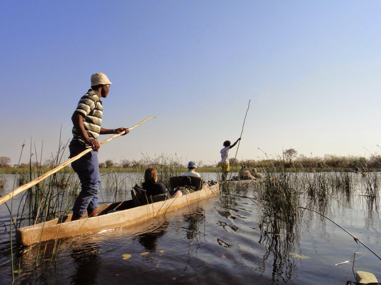 schistosomiasis zambezi river pastile viermi temperatura