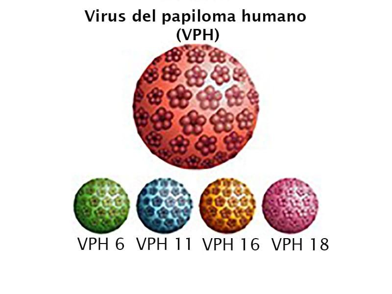 virus del papiloma numero 16