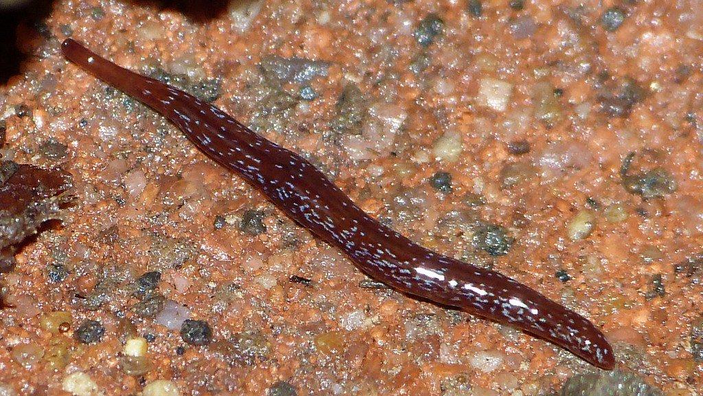 O specie descoperita in premiera in Europa produce ingrijorare in Franta – anvelope-janteauto.ro