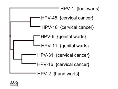 papillomavirus family)