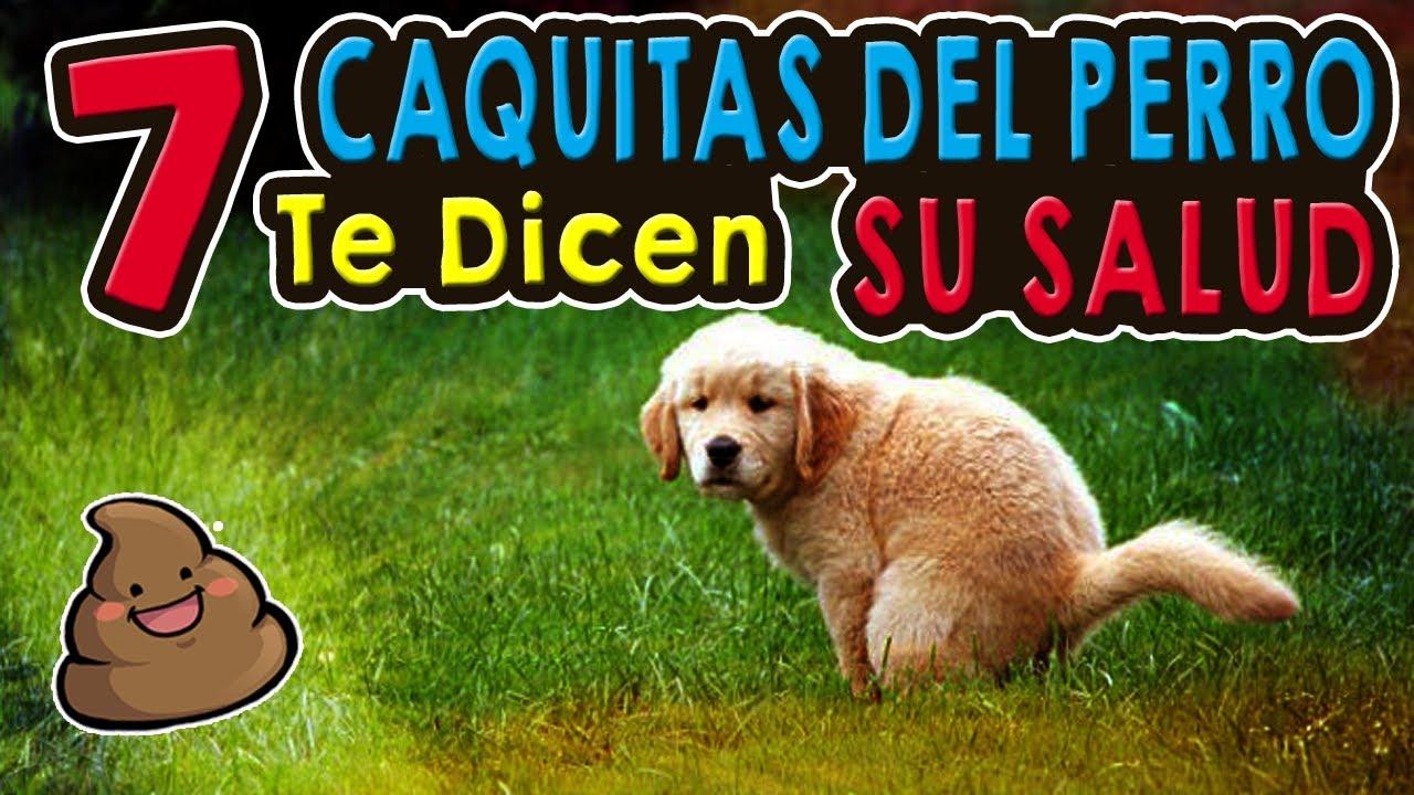 Oxiuros en perros sintomas, Mi perro tiene parásitos. gastric cancer incidence worldwide