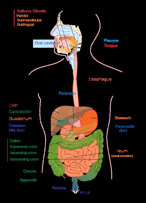 Virus del papiloma como se contagia, Bacteria 1+ urine