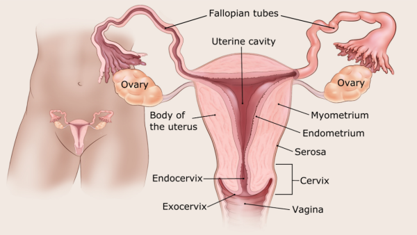 endometrial cancer on pregnancy