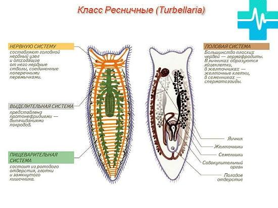 La ce visează viermele sau viermele - Visat la viermi de un copil