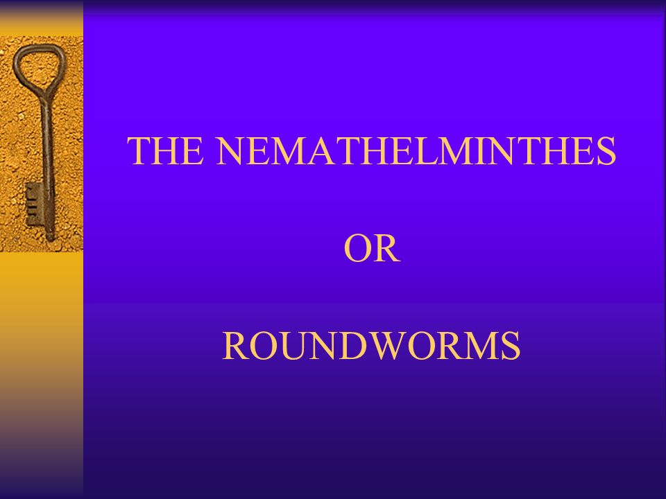 nemathelminthes mai multe nematode)