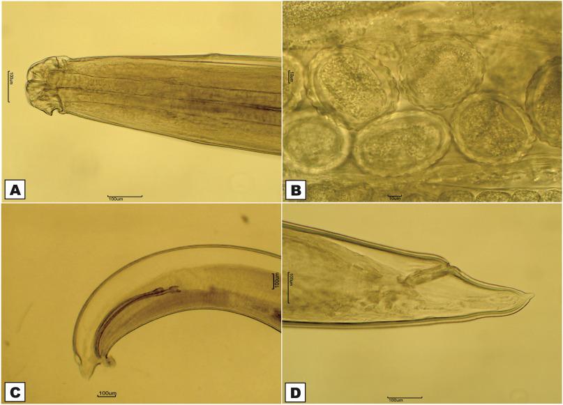 habitatul platyhelminthes cervicale