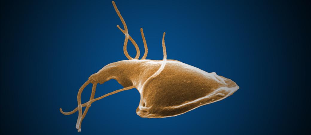 izolarea cdc giardia cauze cancer la colon
