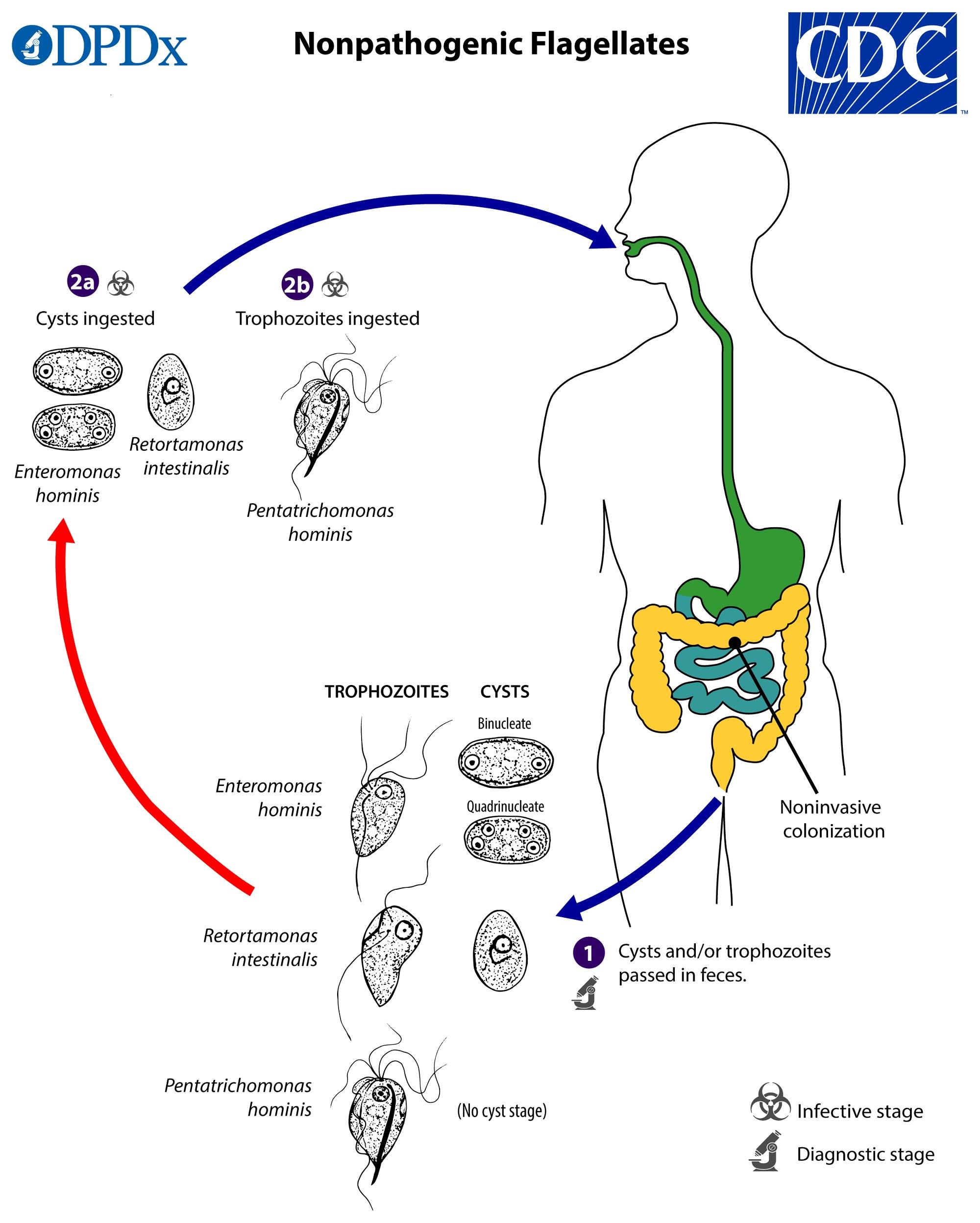 izolarea cdc giardia depresie din cauza verucilor genitale