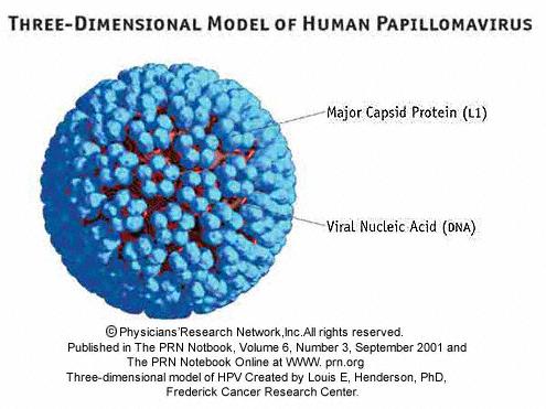 Papillomavirus virus prevention, O metodă pentru tratarea viermilor la adulți