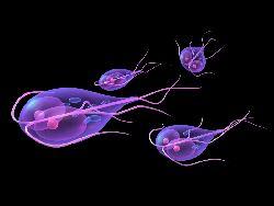 Antigen Giardia