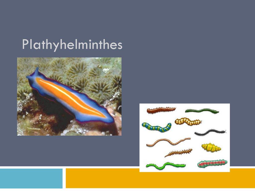platyhelminthes nemathelminthes ppt
