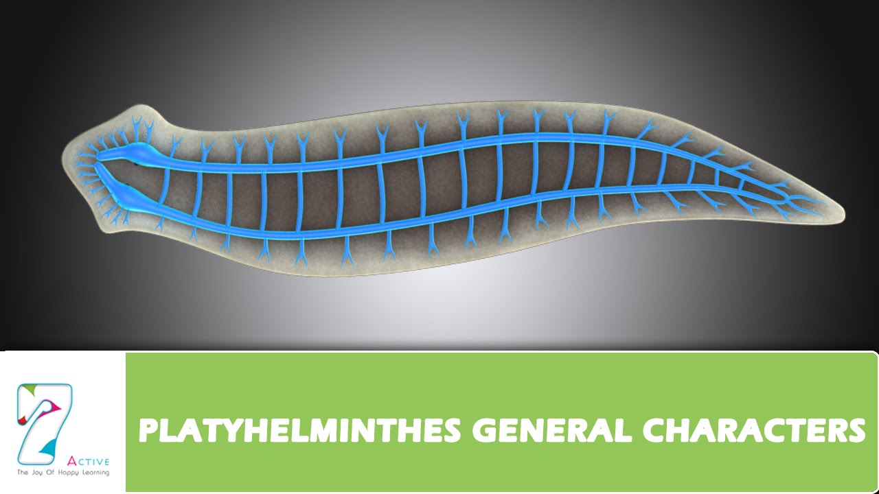 platyhelminthes reproducerea reproducerii)