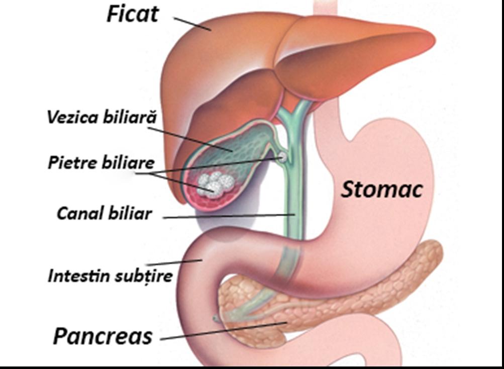 simptomele vezicii biliare la copii