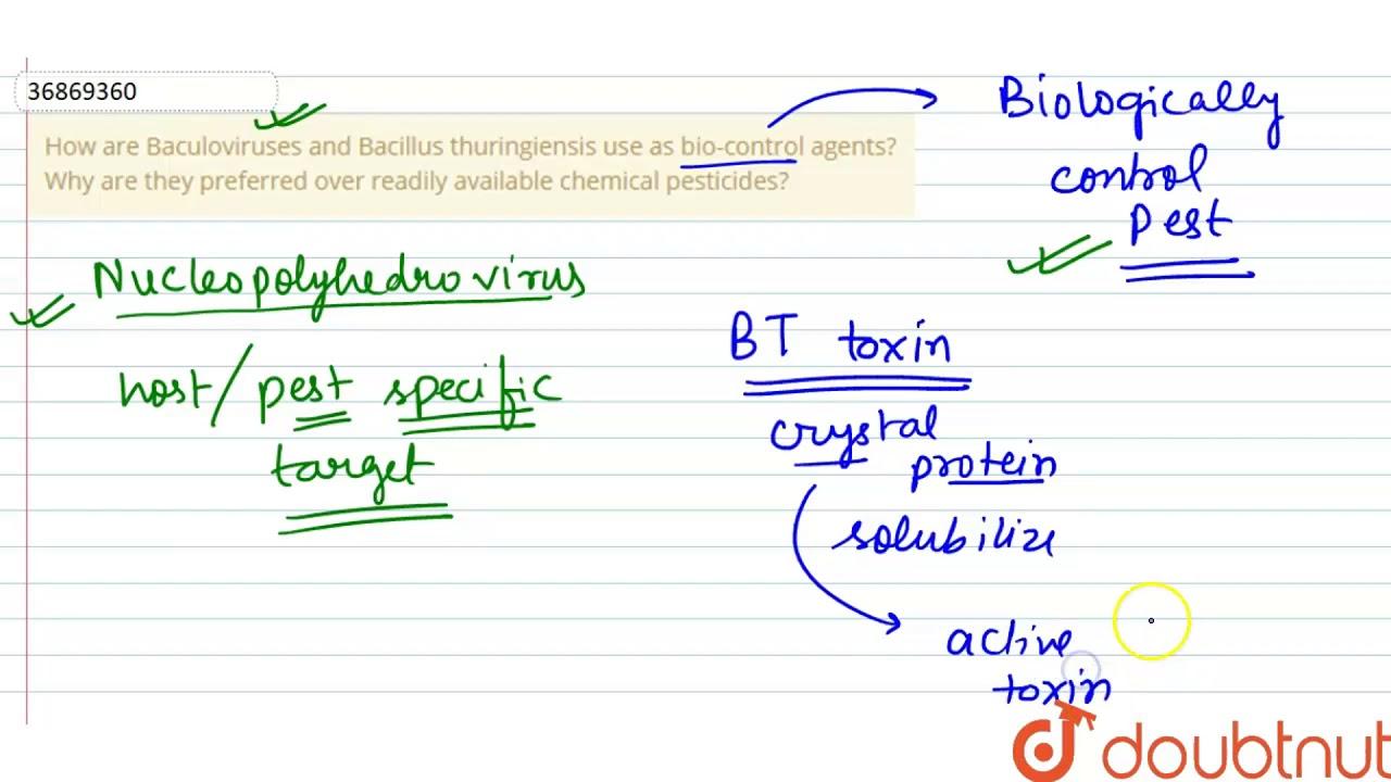 toxine bacterienne transgenique bacillus thuringiensis)