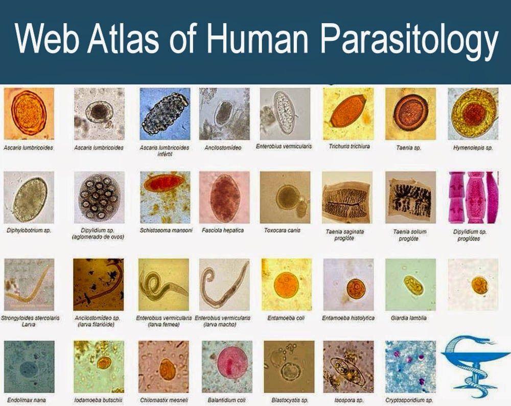 semne parazitare și tratament