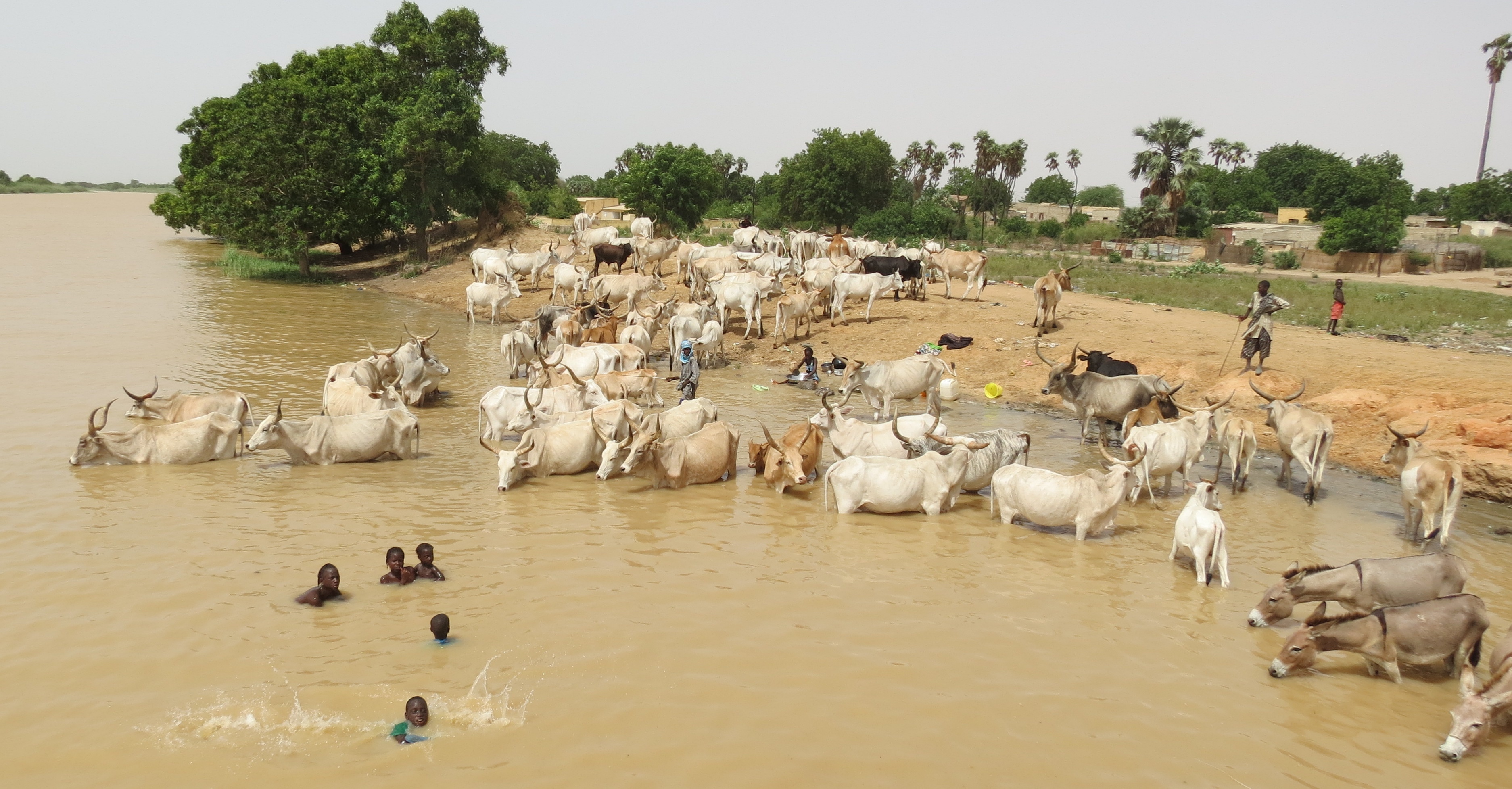 Is schistosomiasis a zoonotic disease