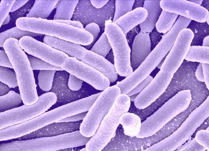 bacterii multidrog rezistente)