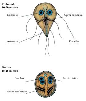 consecințele condilomului la bărbați viermii rotunzi sunt nematode