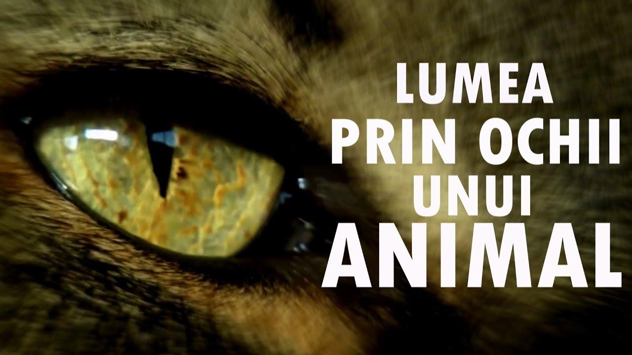 ce viermi sunt în ochiul uman)