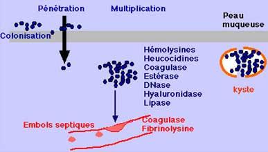 toxine de salmnella typhi)