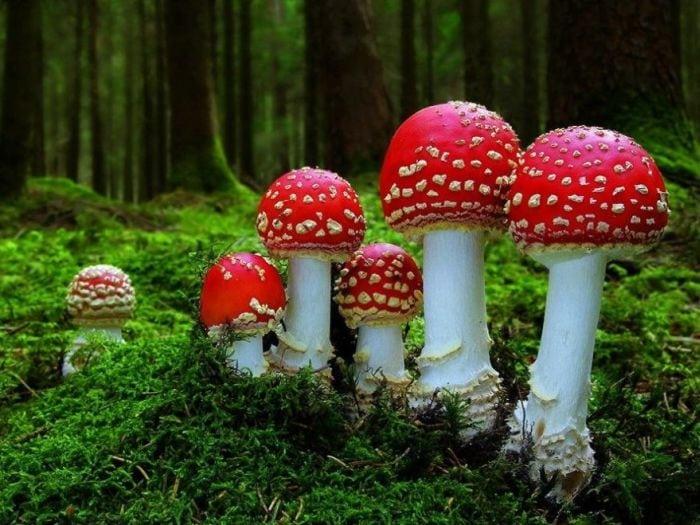 dăunătoare ciupercilor parazite cel mai bun antihelmintic cu spectru larg