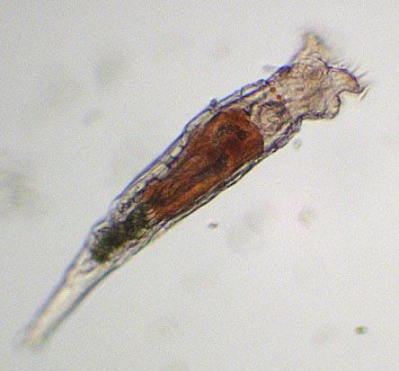analize paraziti intestinali hpv virus and cheating
