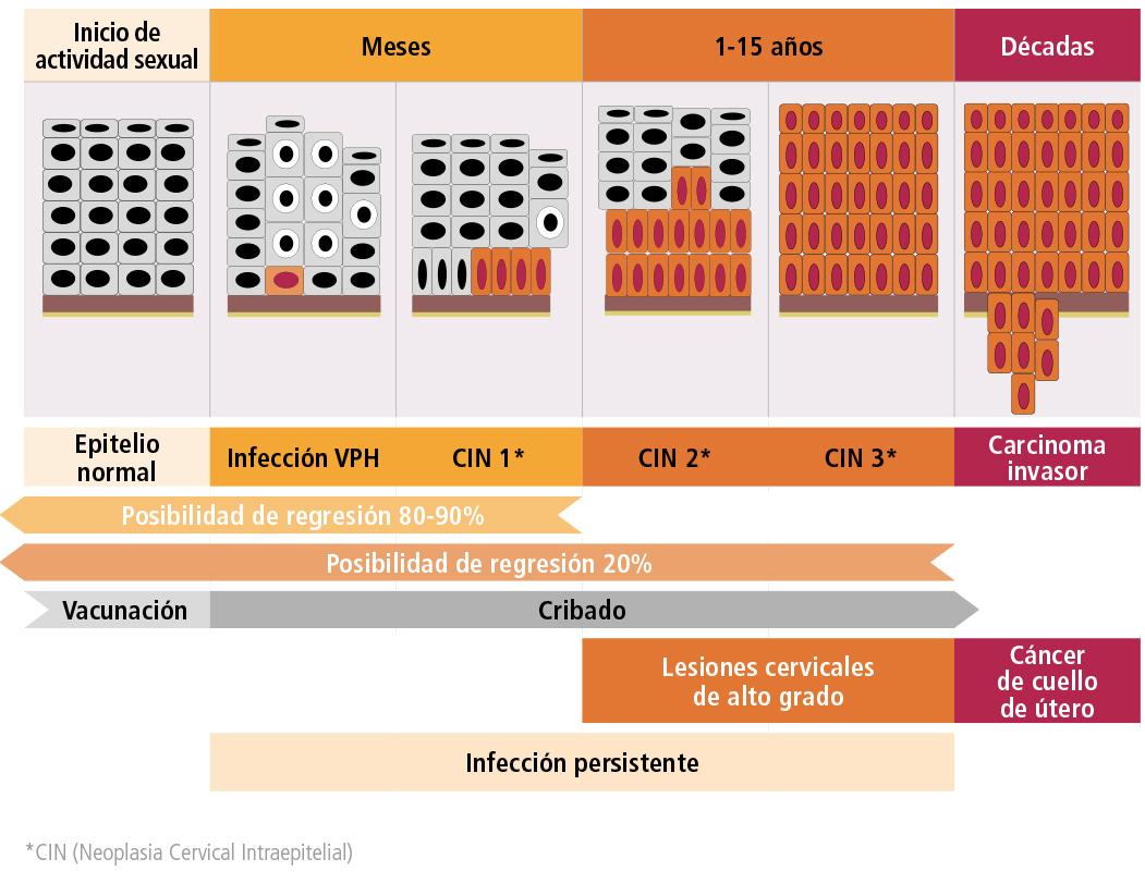 Virus papiloma nivel 16. HPV - Wikipedia