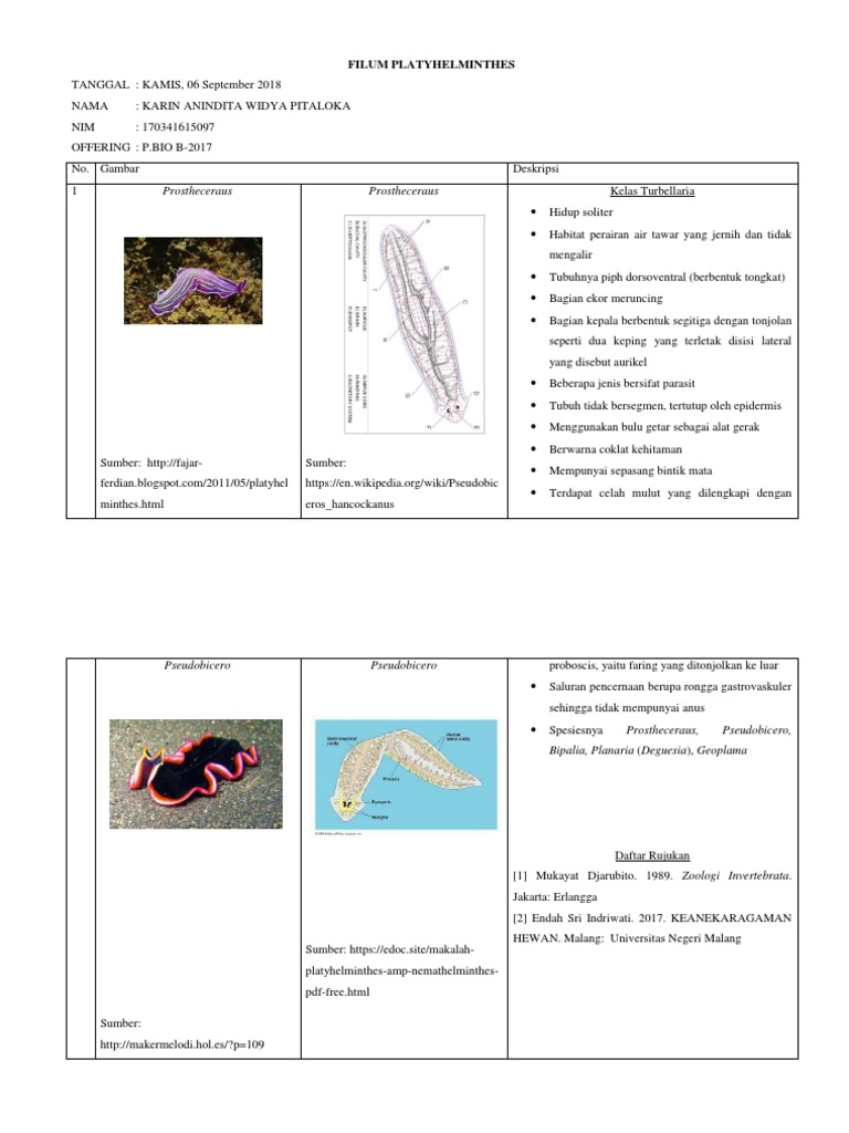 laporan filum platyhelminthes recidive papilloma vescicale