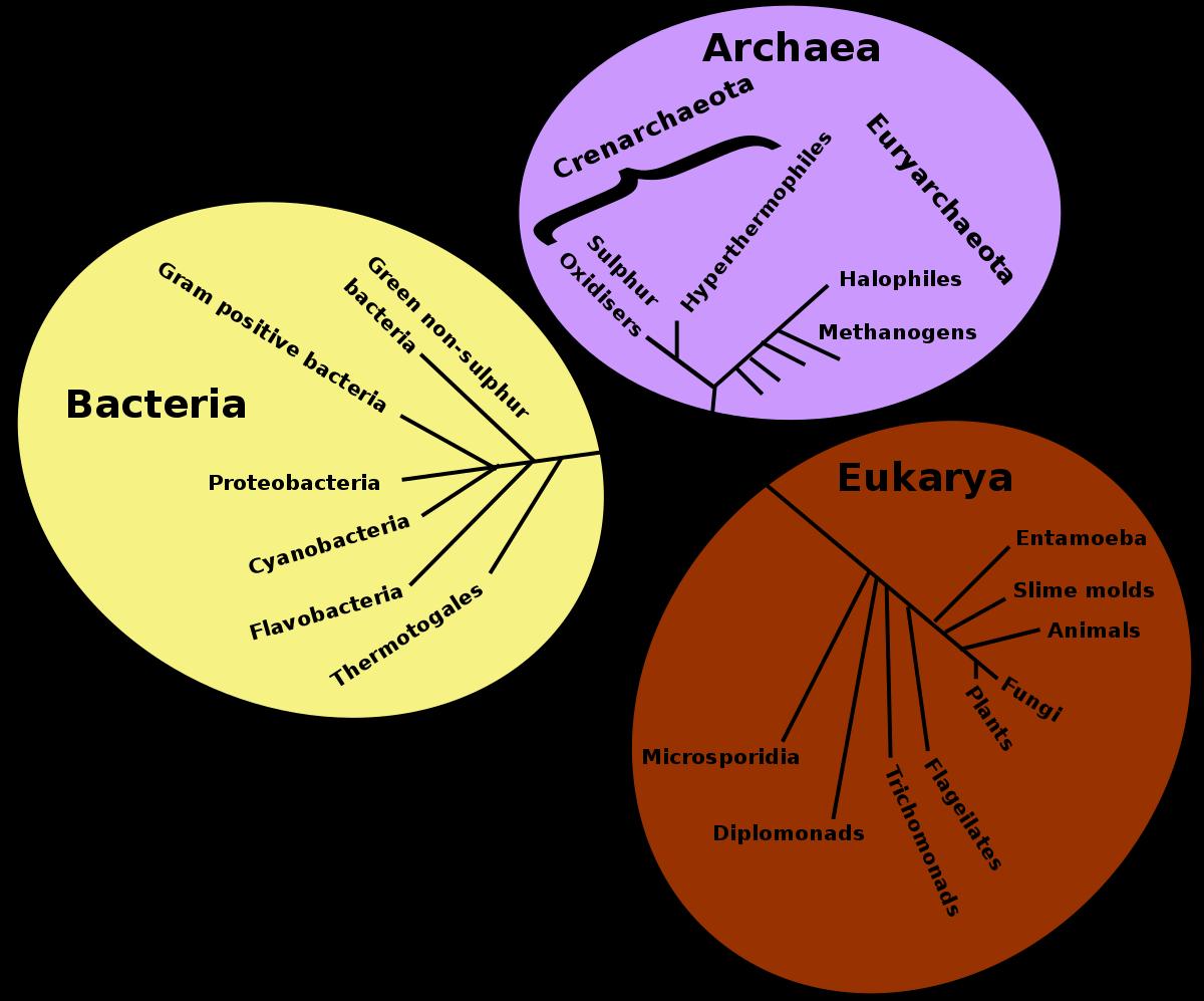 Test de biologie pe tema ciupercilor.
