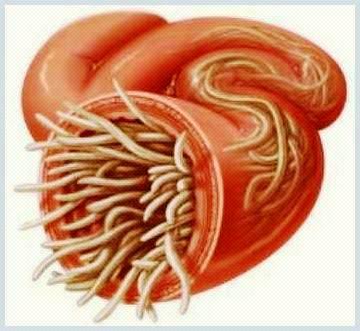 simptomele parazitului