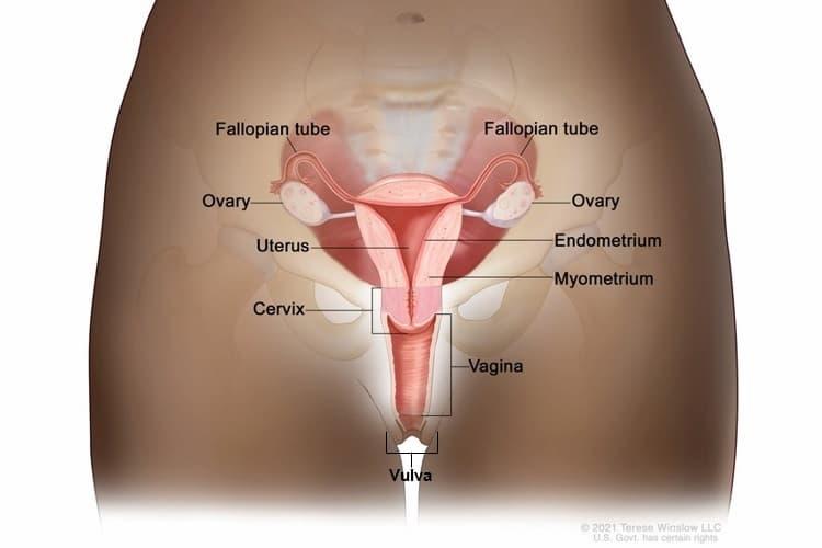 nemathelminthes filo pentru verucile genitale un remediu