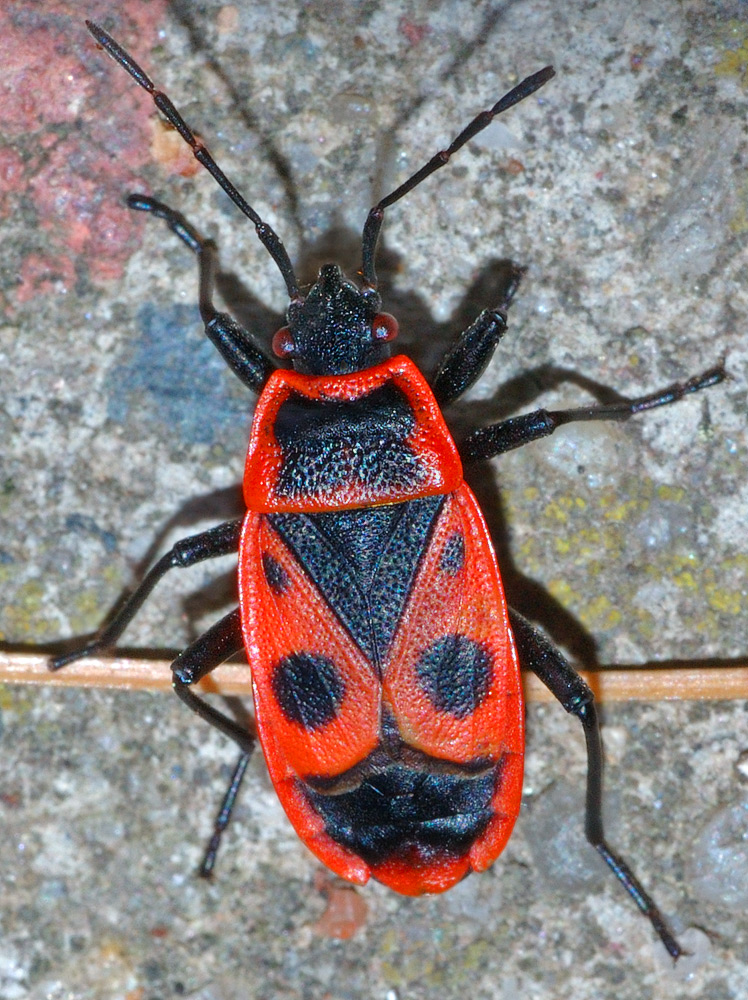insecte york)