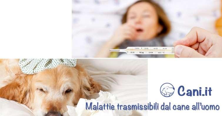 giardia cane contagio uomo