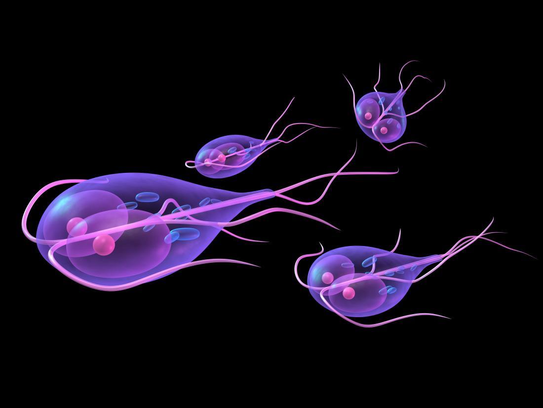 parasiet giardia bebe)