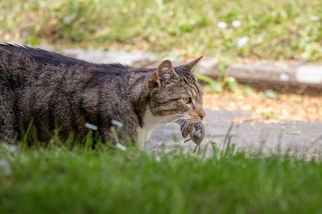 paraziti kod macaka simptomi