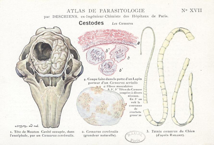 tratamentul paraziților pulmonari