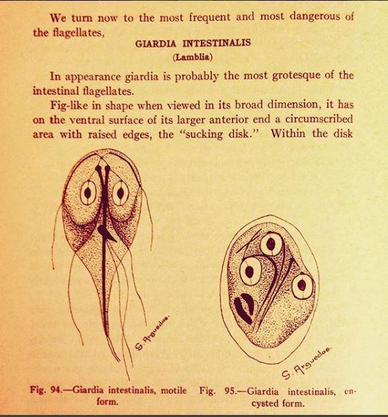 parazit giardia lamblia