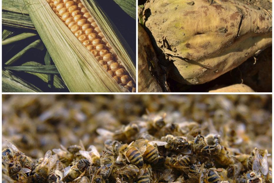 Vând insecto-fungicid NUPRID la ambalaj de 5 l de lei pe litru Focsani • anvelope-janteauto.ro