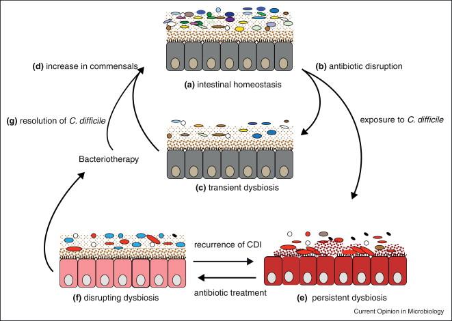dysbiosis microbiology