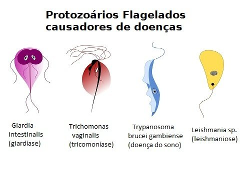 amebieza giardiozei structura verucilor genitale